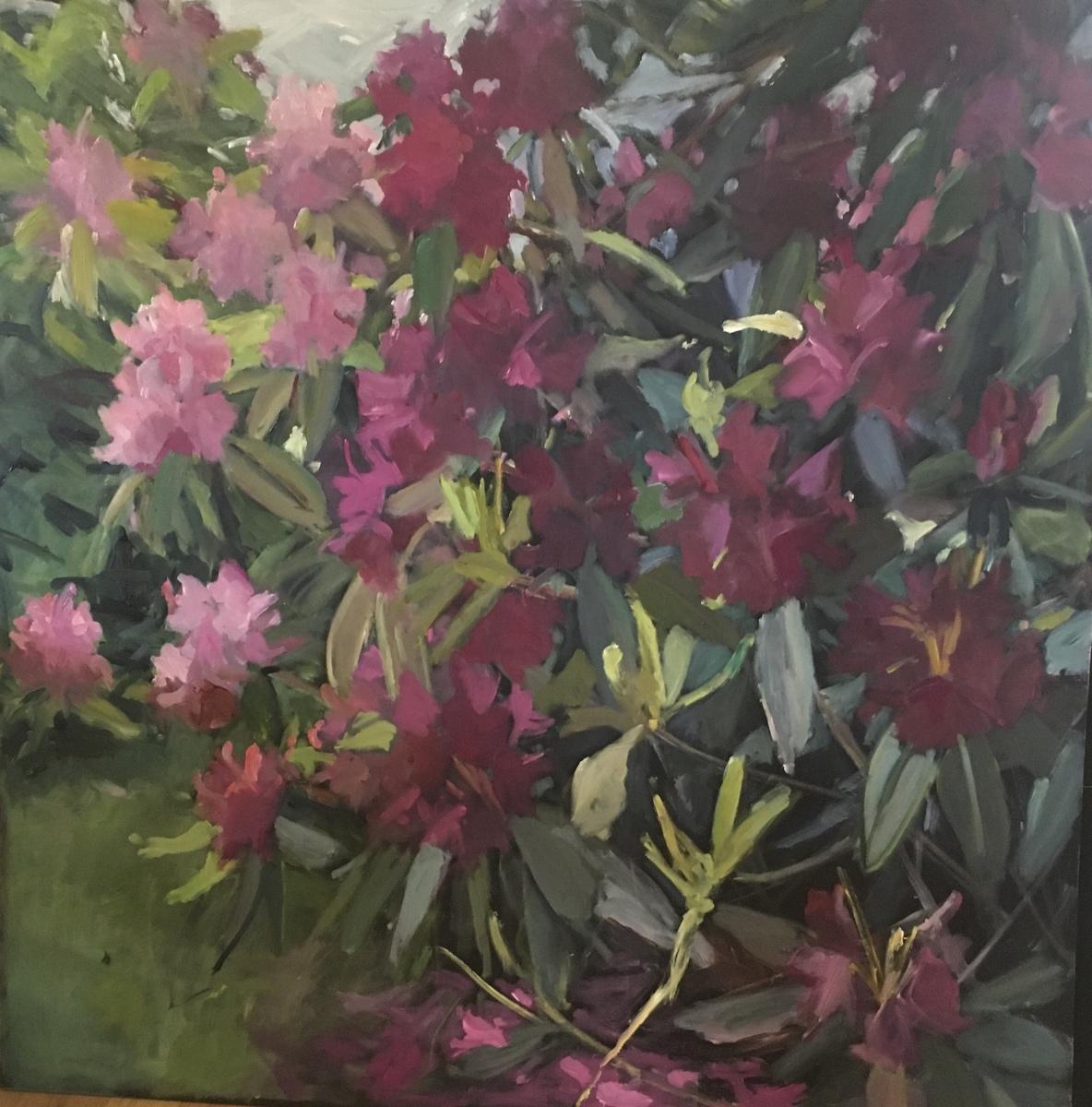 Pink Rhoddies from Carruth